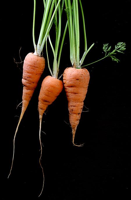 Carrots 450